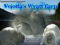Immortal Great Danes and Glacier Mini Lops | The Rabbits
