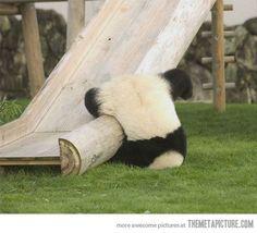 パンダの落下
