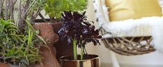 5 Houseplants to Cure Your Black Thumb
