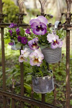 Hornveilchen tips, herb fairy garden, balcony garden Garden Gates, Garden Art, Garden Design, Balcony Garden, Garden Tips, Herb Garden, Fleur Pansy, Violet Garden, Deco Floral