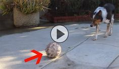 GONE VIRAL: They're calling him the smartest dog ever (don't miss the end!)