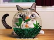 cute and funny animals - Google Search
