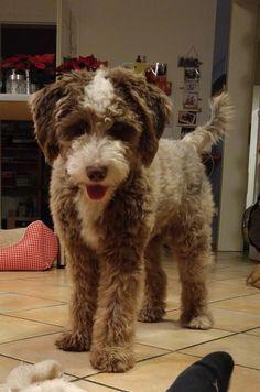 7 Puppy Love Ideas Puppy Love Dogs Puppies