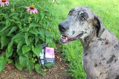 Dogs can't read!  But sometimes their masters can write.  Done Growed Up is available at Amazon, Barnes & Noble and select bookstores everywhere!  Sophie recommends!