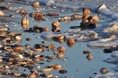 Beach stuff, Sanibel after a storm   Flickr - Photo Sharing!