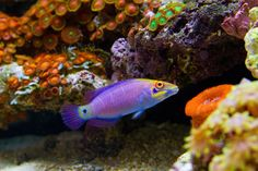 40 Breeder Pics - Reef Central Online Community