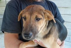 Jaidee is a very friendly and affectionate puppy who loves to play and get cuddled by humans. She gets on well with other dogs as well as people.