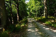 Durch den Wald auf dem Neuberg