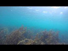 Spectacular Encounter With Orcas! • Scuba Diver Life