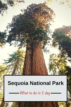 Not sure what to do with only one day in Sequoia National Park? Check out our tips on how to make the most of one day!: Not sure what to do with only one day in Sequoia National Park? Check out our tips on how to make the most of one day! California National Parks, Us National Parks, California Travel, Northern California, Fresno California, California Living, Central California, California Beach, Death Valley