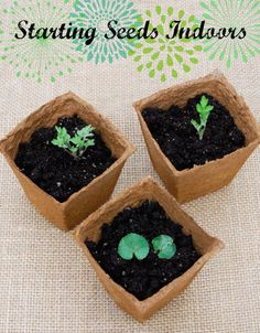 Gardening 101: Starting Seeds Indoors #gardening #garden #seeds