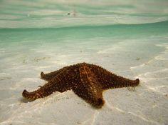 Starfish on the seafloor,The Bahamas