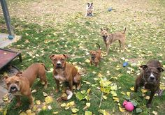 Same family of rescue dogs I've pinned before - I just love how welcoming the dogs are to newcomers. The two in the middle just joined the family after being rescued from the meat trade.