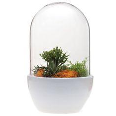 Mini Pill Terrarium