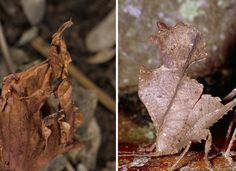 Can You Spot the Mimic? - The New York Times. Both of these are mimics.