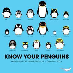 Al principio creía que era un cartel de linux....  Diferentes tipos de pingüinos.