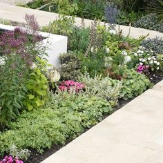 pretty flower beds in white rendered flower bed walls