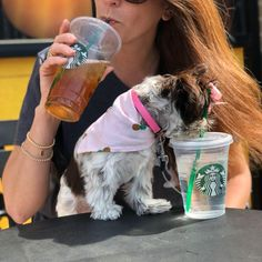 Quality ShihTzu for quality homes for Pets and Therapy dogs. We offer LIFETIME advice for your Glory Ridge ShihTzu. Imperial shihtzu to standard size shihtzu in every color. Therapy Dogs, Shih Tzu, Puppies, Drink, Mom, Pets, Sweet, Baby, Candy