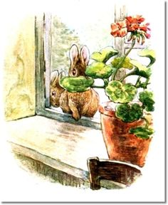 The Tale of The Flopsy Bunnies - 1909 - Bunnies at Window Behind Flower Pot