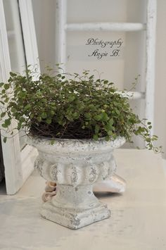 Sweet little plant in a rustic urn