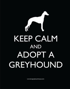 anim, greyhounds, keep calm posters, italian greyhound, adopt, new dog, friend, whippet, pet store
