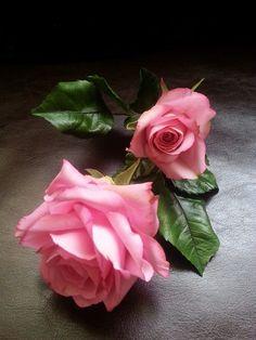 La Lavande Sugar Florist