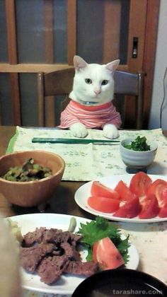 "* * "" De only thing dat lookz good over der iz de meat. And dey expect meez to use chop sticks? I gotta plans an escape."""