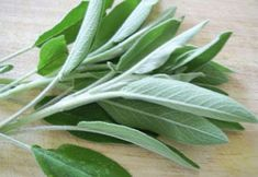 Sage Benefits & Information (Salvia Officinalis) Benefits Of Burning Sage, Sage Benefits, Health Benefits, Healing Herbs, Medicinal Plants, Natural Healing, Holistic Healing, Natural Herbs, Natural Hair