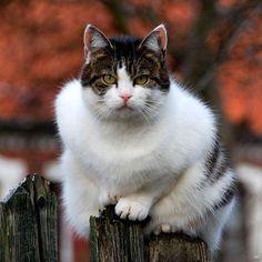 beyond beautifully white cat!jn