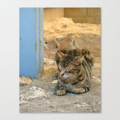 Cat Stretched Canvas by Amy Smith - $85.00