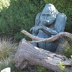 Jones Family Gorilla Preserve at San Francisco Zoo San Francisco, CA #Kids #Events