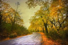 Title  Fall Of The Leaf   Artist  Kandy Hurley   Medium  Photograph - Prints