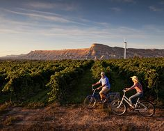 Grand Junction, Colorado is Wine Country! Tour 20 wineries in the area with spectacular views. Visit Colorado, State Of Colorado, Colorado Homes, Colorado Rockies, Colorado Trip, Colorado Tourism, Grand Junction Colorado, Wine Lovers, Wine Festival
