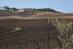 The wine country of Paso Robles. #globalphile #travel #tips #destinations #lonelyplanet #ca #winery #winecountry http://globalphile.com/city/paso-robles-cayucos-california/