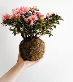 """Das possibilidades de se reinventar a jardinagem, uma novidade linda são os jardins suspensos, também conhecidos como string gardens (na tradução literal, jardins de corda) ou ainda kokedama, uma variação do estilo botânico japonês que significa """"bola coberta de musgo""""."""