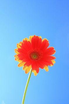 Colored Mondays - Happy Orange Flower!