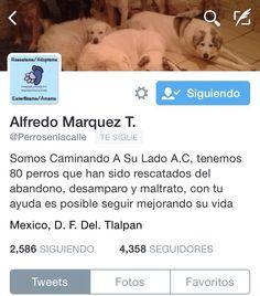Te recomendamos seguir a @perrosenlacalle y apoyar la adopción y el #rescateanimal #adoptanocompres #proteccionanimal