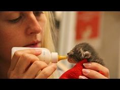 ▶ Best Friends Animal Society Los Angeles Kitten Nursery Tour - YouTube