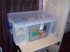 Housing Your Hamster Bochdew Hams