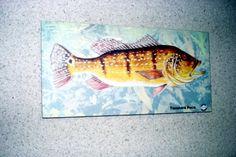 Placa Decorativa 28x14cm * Tucunaré Paca * Imagem Art - R$ 20,00 em Mercado…