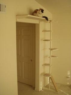Cat Trees That Look Like Trees For Sale To buy or not to buy a cat #TreePlan - Top 10 at - Catsincare.com!                                                                                                                                                                                 More