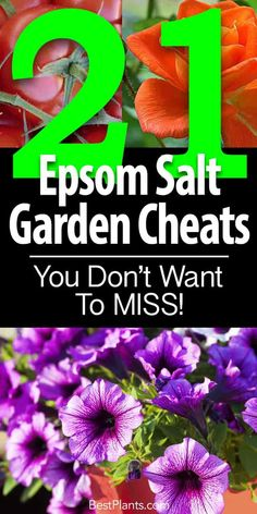 Epsom salt for plants works as a magnesium fertilizer on flowering plants, tomatoes, roses, peppers and many other garden vegetables in the garden. [MORE]
