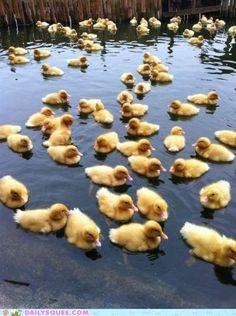 cute animals - Duckie Convention
