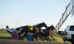 Harness Racing, Action, Group Action
