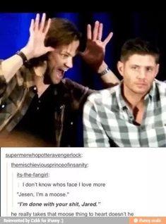 funny supernatural meme jared and jensen Funny Supernatural Memes, Spn Memes, Supernatural Moose, Supernatural Birthday, Funny Memes, Winchester Supernatural, Jared And Jensen, Jensen Ackles, Winchester Boys