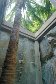 palm tree in an outdoor shower, i love outdoor showers!