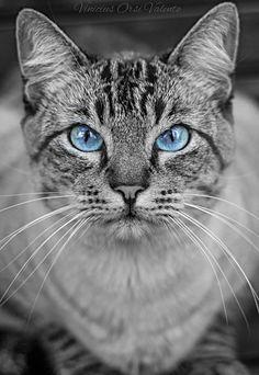 Bob the cat…°