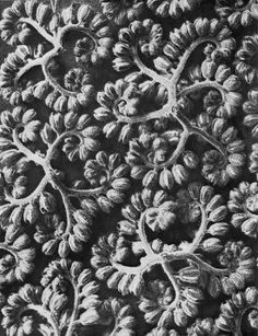 Creative Sketchbook: Captivating Naturally Inspired Photography by Karl Blossfeldt!