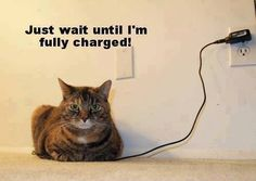 Funny, kitty, cat, furry, fluffy, uploading, electric, haha, giggle, humour, photo.