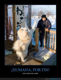 no se puede medir el amor de un perro